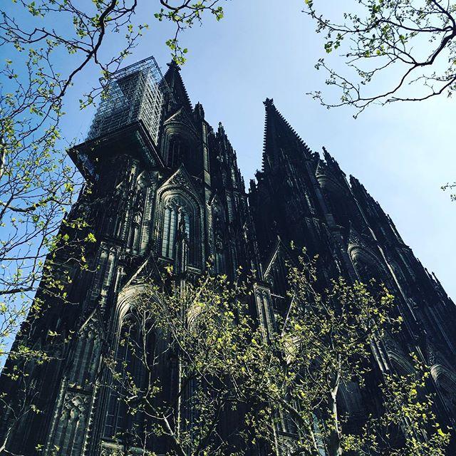 Der Kölner Dom in seiner Pracht #cologne