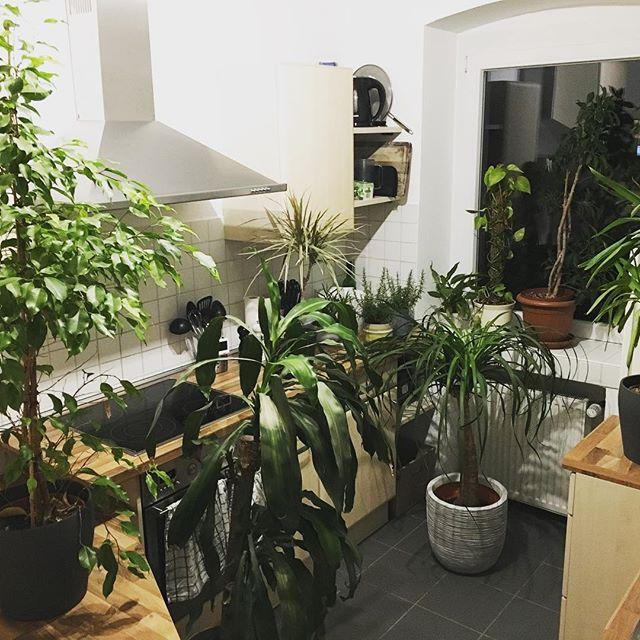 Unsere Küche ist nun ein Dschungel