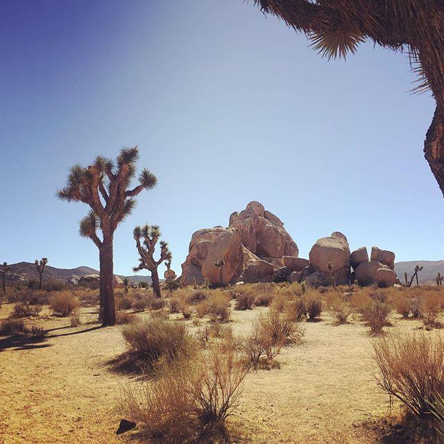 Im Joshua Tree Nationalpark gibt es einige abgefahrene Felsformationen und Yucca-Palmen zu sehen. Echt empfehlenswert! #roadtrip #joshuatree