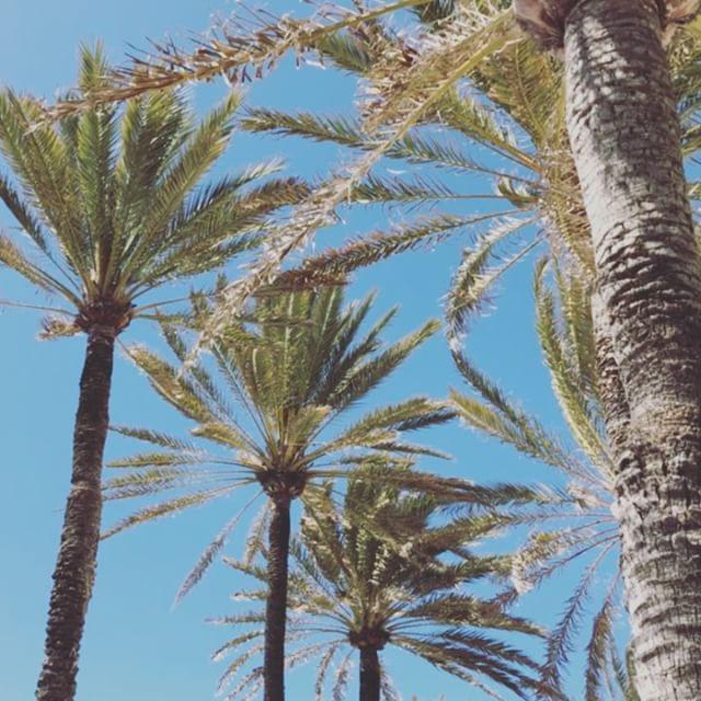 Windiges Palma #mallorca