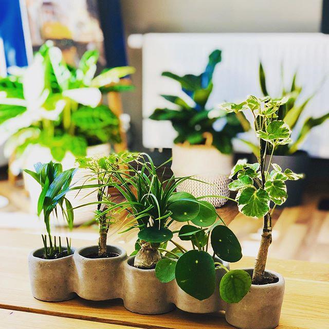 Mein Mikro-Dschungel #urbanjungle